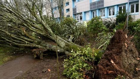Le taux des assurés ne dépasse pas les 5%: Peu d'engouement des Oranais pour l'assurance contre les catastrophes naturelles
