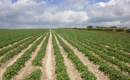 Les États-Unis et l'Algérie renforcent la coopération commerciale dans les secteurs de l'agriculture et de la construction