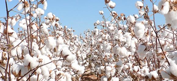 Bénin : Réunion de coordination des pays co-auteurs de l'initiative sectorielle en faveur du coton
