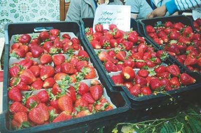 Algérie:Une production de 14.000 tonnes de fraise attendue à Jijel