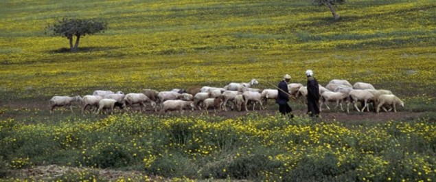 Colloque sur la sécurité alimentaire en Algérie en mai à Alger