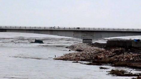 Catastrophe écologique à l'Est du pays: Un autre crime contre la flore à Annaba