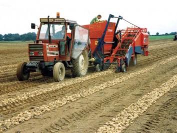 Bouira : Validation de plus de 500 demandes de crédit R'fig au profit des agriculteurs