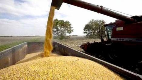 Lancement de la campagne de moissons-battages: Environ 450 000 quintaux de céréales attendus à Aïn-Temouchent