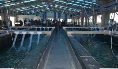 L'aquaculture seule solution susceptible de couvrir le déficit en production piscicole en Algérie