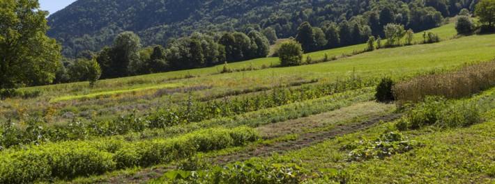 Relizane: Les herbes sèches, un danger à éradiquer