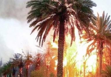 Ouargla:  Plus de 5 000 palmiers partis en fumée