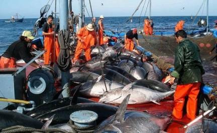 Campagne de pêche au thon rouge : 14 navires algériens y participeront
