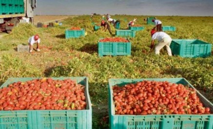 Protestation des producteurs de tomate industrielle à Guelma