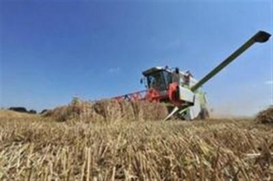 Guelma: 300 hectares de récolte de blé sauvés des flammes à la ferme Richi