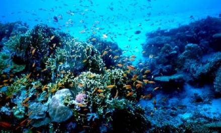 L'Algérie prend 8 engagements volontaires pour la préservation des mers et des ressources marines