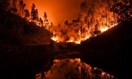 Au moins 57 morts dans un violent feu de forêt au Portugal