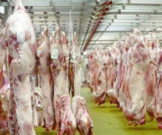 Reportage:  Sortie avec une brigade mixte de contrôle de la qualité des viandes à Boumerdès
