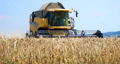 Les pluies de mai et de début juin ont été profitables: Surproduction céréalière à l'est du pays