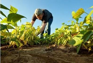 Programme pour le développement du secteur agricole: L'UE «offre» 10 millions d'euros à l'Algérie
