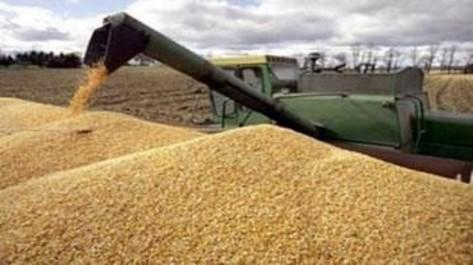 En raison d'un manque de pluviométrie: La récolte céréalière risque de chuter à Bouira