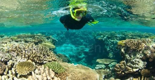 Les aires marines protégées atténuent les effets du changement climatique