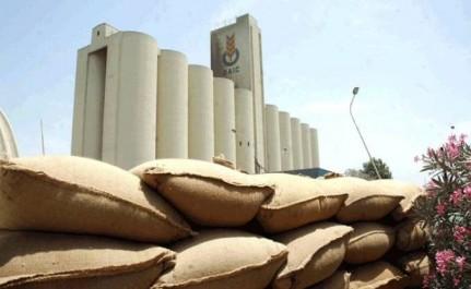 L'OAIC seul organisme habilité pour accompagner les maïsiculteurs de la wilaya d'Adrar