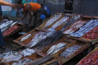 Légère baisse des prix du poisson bleu: Plus de 72 tonnes pôchées hier aux ports d'Oran et d'Arzew