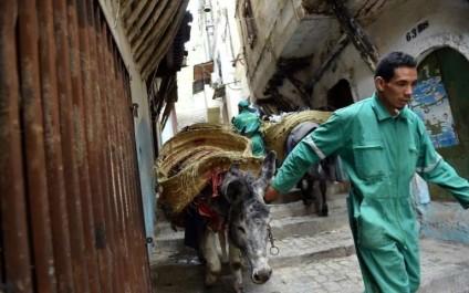 Alger: L'âne, «camion-poubelle» de la Casbah depuis 5 siècles