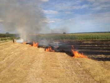 Près de 40 hectares de champs de blé ravagés par le feu à El Tarf
