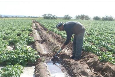 Les contraintes d'irrigation des terres agricoles réapparaissent: Les fellahs de Sidi-Daoud, Cap-Djinet et Ouled Aïssa se plaignent