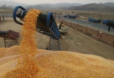 El-Bayadh: Une production de céréales prometteuse
