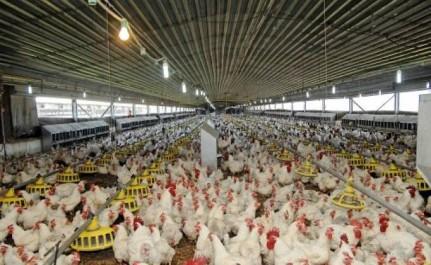 Rupture des stock à l'Est du pays: Le SOS des producteurs et des éleveurs