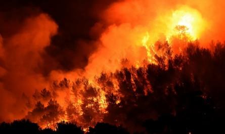 Encerclée par les feux de forêts: Tizi Ouzou suffoque