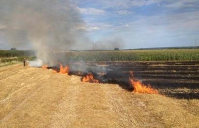 Guelma: plus de 140 ha de récoltes agricoles et couvert végétal ravagés par les incendies