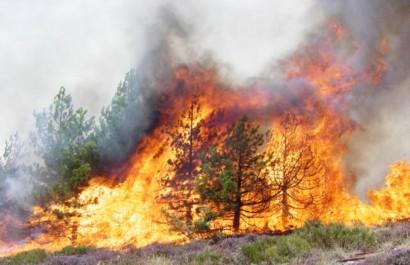 Tissemsilt: Les flammes ravagent 9,5 ha