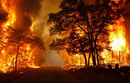 Constantine: 25 hectares de couvert végétal ravagés par les incendies dans la commune de Benbadis
