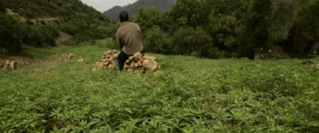 Le Maroc est le principal exportateur de résine de cannabis en Europe