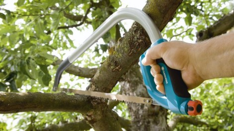 Sidi-Bel-Abbès: Écroué pour avoir scié des troncs d'arbres de la forêt