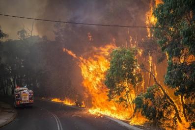 Guelma: Vague de chaleur et incendies