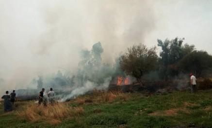 Vidéo: Incendies à Azazga, des habitations menacées