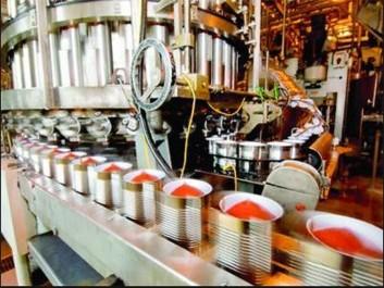 El-Tarf: La filière tomate industrielle à la peine