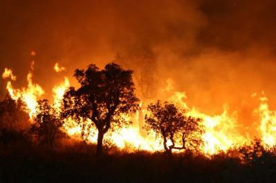 Indemnisation des incendies de la semaine dernière Bouazgui à Tizi-Ouzou pour réaffirmer l'engagement de l'État