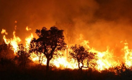 Chlef: 32 feux de forêt depuis le mois de juin
