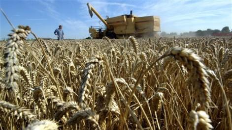 Trafic sur le blé importé et subventionné: Un réseau démantelé à Béjaïa