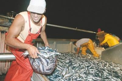 Production nationale de sardine: Un déficit annuel de 100 000 tonnes