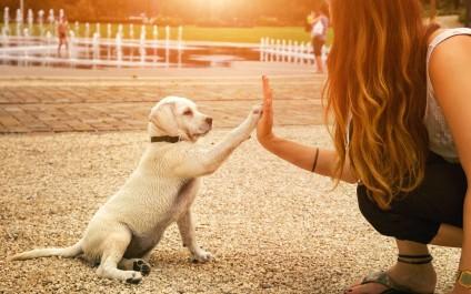 Domestication du chien : s'il est notre ami, c'est grâce à la génétique