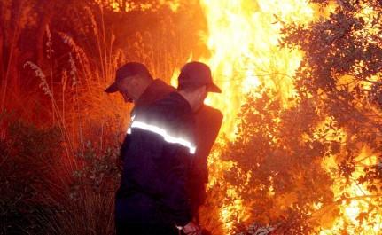 Une superficie de 17 400 ha touchée par les feux de forêts en une semaine