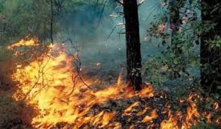 Un CIM pour les feux de forêt