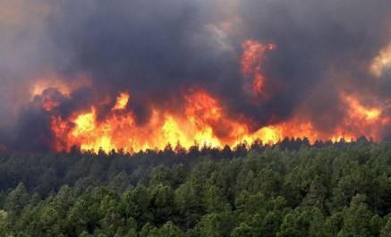 Le directeur général des forêts  accuse: «Des feux ont été provoqués pour le charbon!»