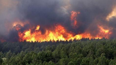 Canicule à Guelma: Risque accru d'incendies