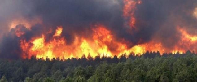 Les forces de l'ANP interviennent pour maîtriser les feux de forets