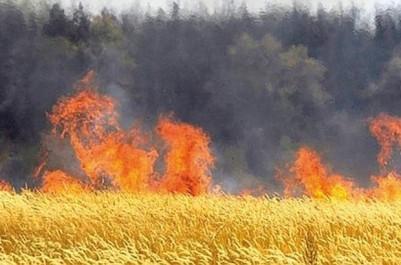 Bouira : la CRMA indemnise une vingtaine d'agriculteurs sinistrés