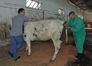 Les vétérinaires d'Algérie et d'Afrique en conclave en septembre à Oran