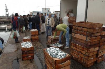 Relizane: Du poisson vendu à l'air libre et sous un soleil de plomb